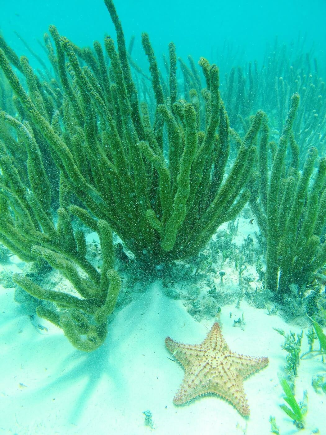 Snorkeling-Tours-Cancun-Dive-Center-Caribbean-Connections-5