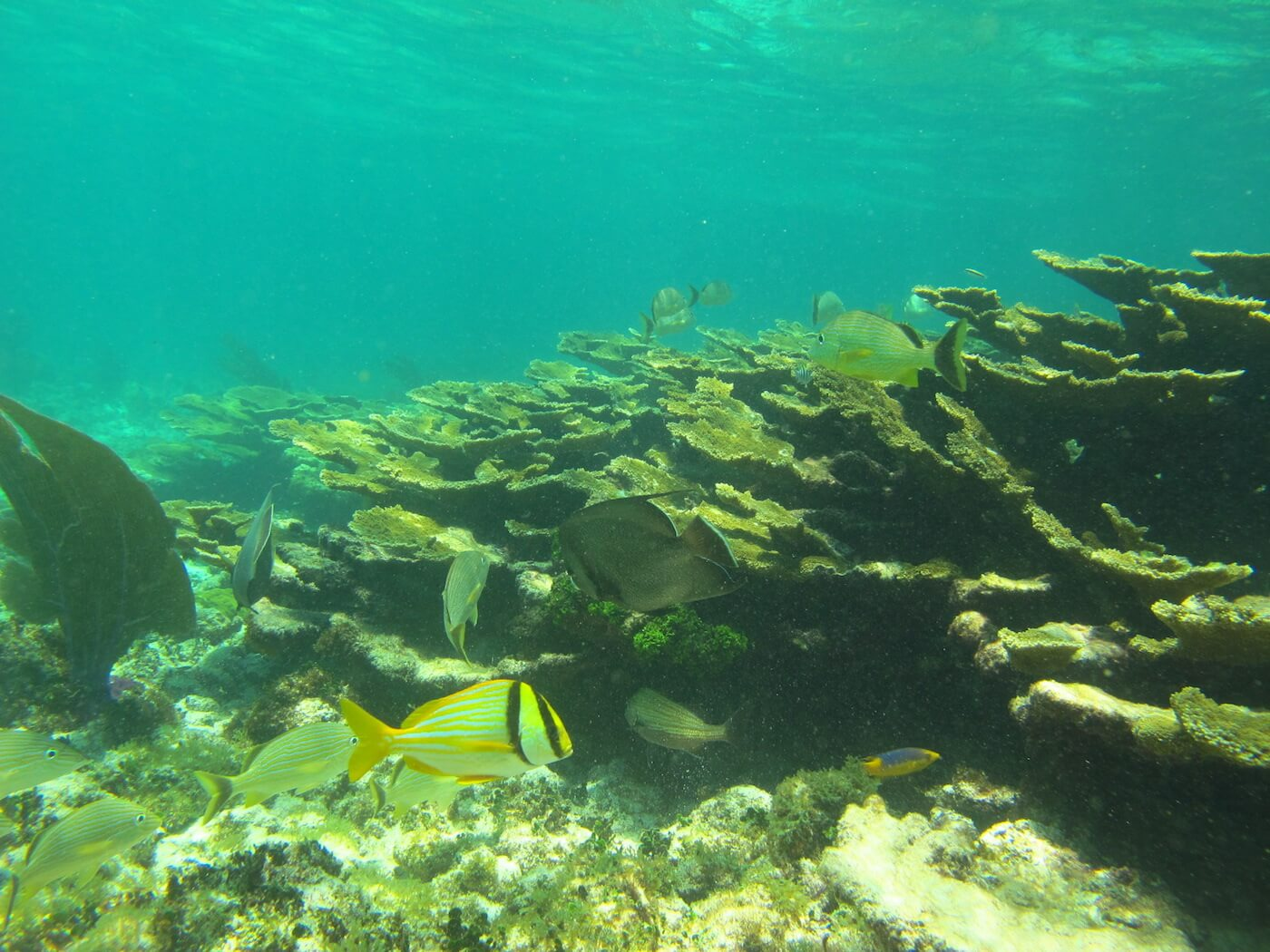 Snorkeling-Tours-Cancun-Dive-Center-Caribbean-Connections-7