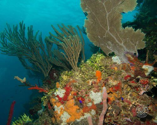 Roatan-Cruise-Ship-Dive-Course-Coconut-Tree-Divers-31