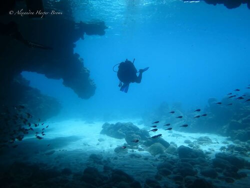 Roatan-Cruise-Ship-Dive-Course-Coconut-Tree-Divers-33