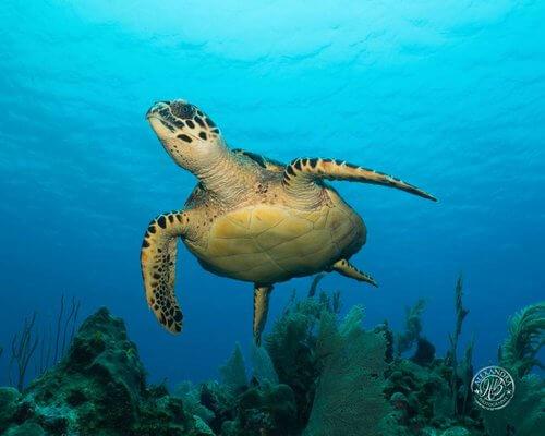 Roatan-Cruise-Ship-Dive-Course-Coconut-Tree-Divers-36