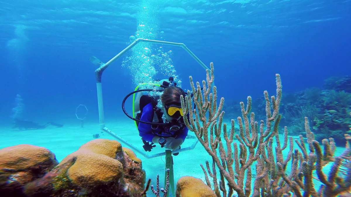 Scuba-Diving-Course-Roatan-Dive-Shop-Coconut-Tree-Divers.jpg2