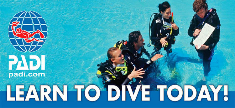 learn to dive today padi banner with an instructor teaching dive students