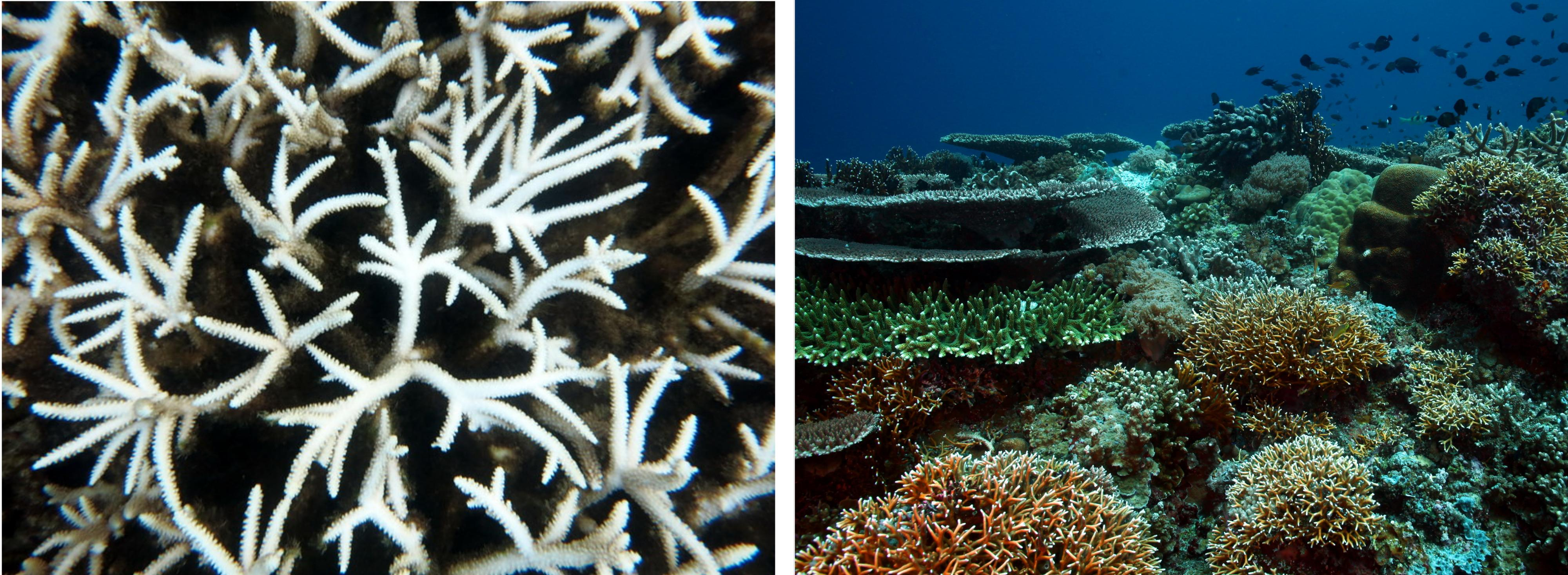 Wear Reef Safe Sunscreen to prevent coral bleaching