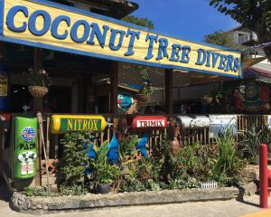 coconut tree divers roatan honduras