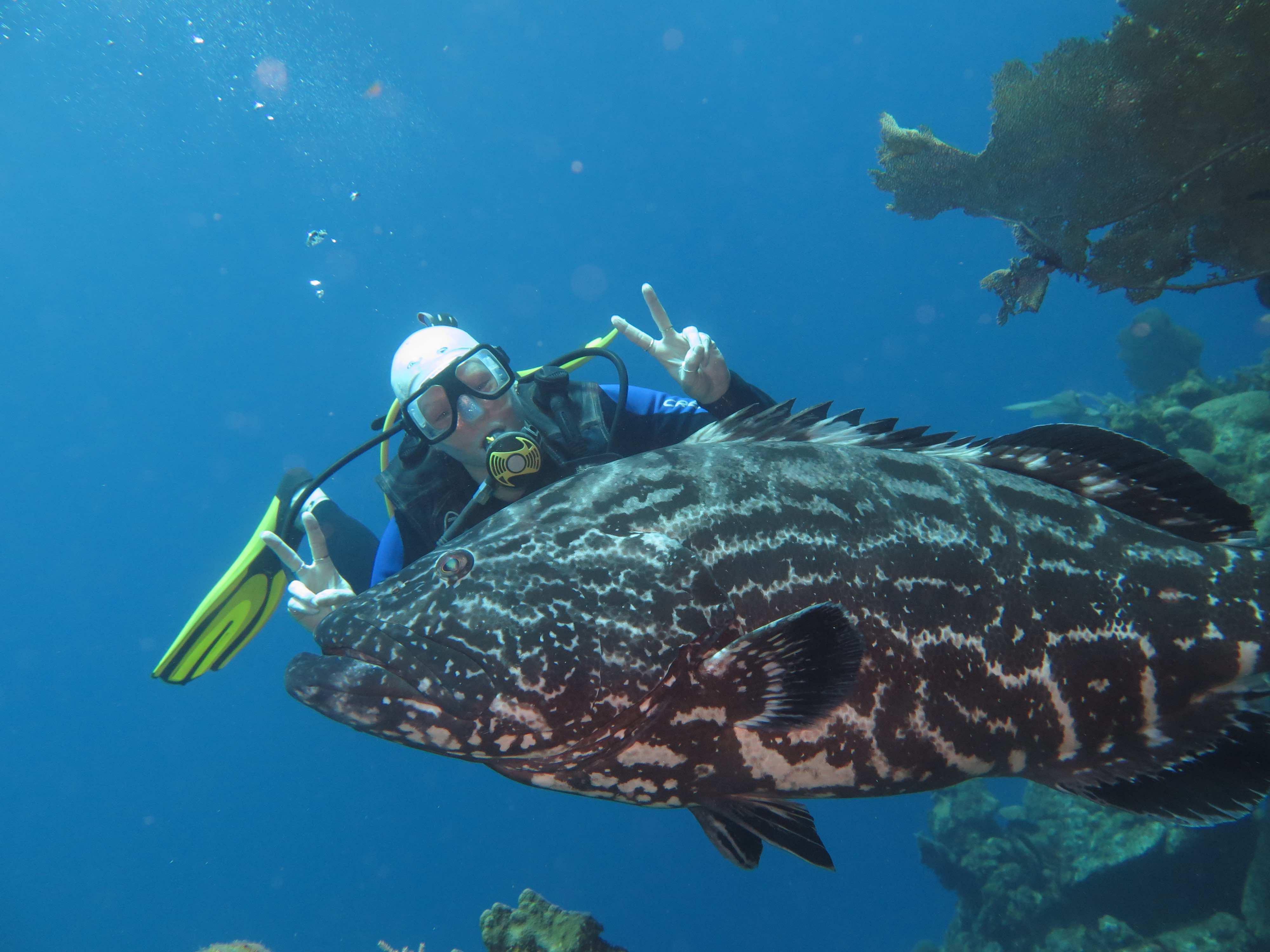El Aguila Grouper dive site Roatan
