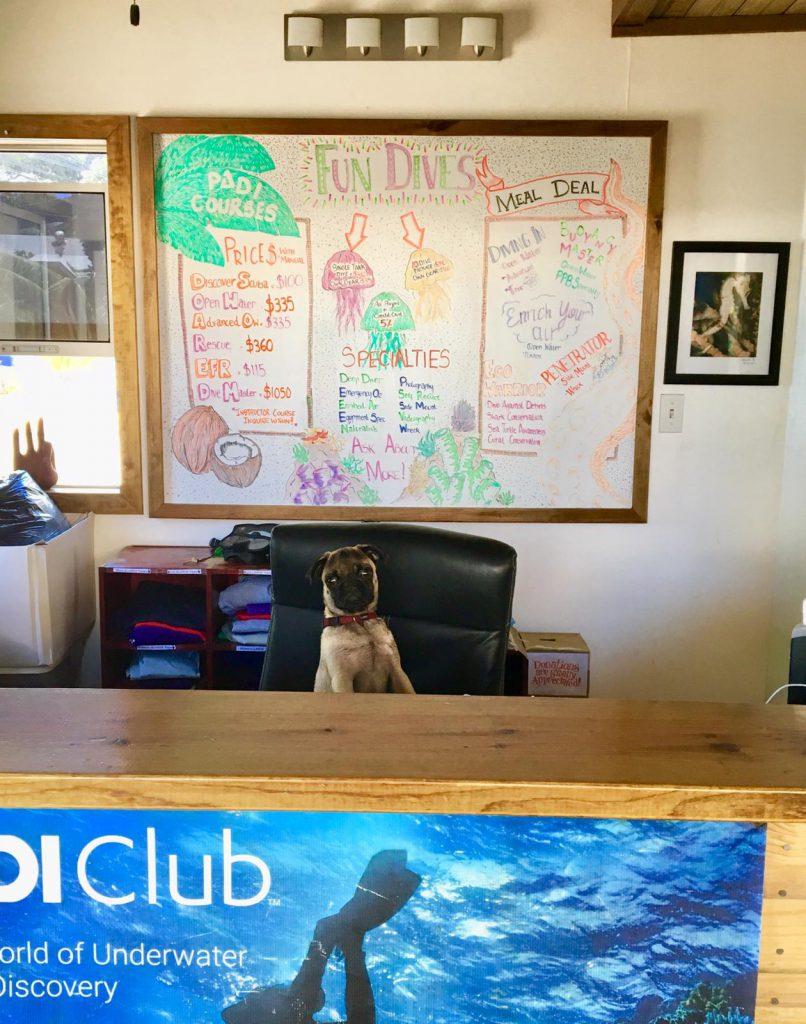 Molson's front desk responsibilities