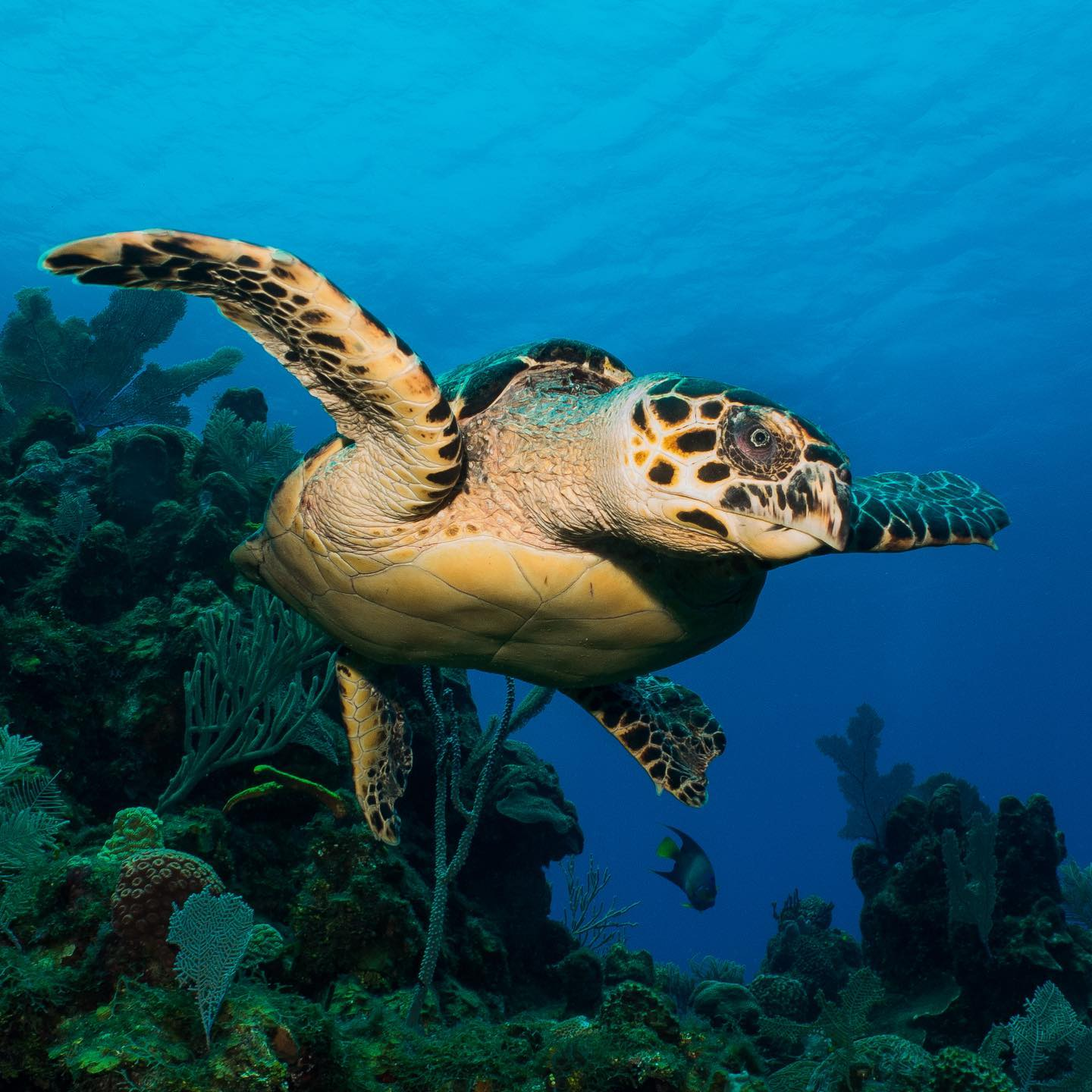 How to conserve air while diving turtle roatan honduras