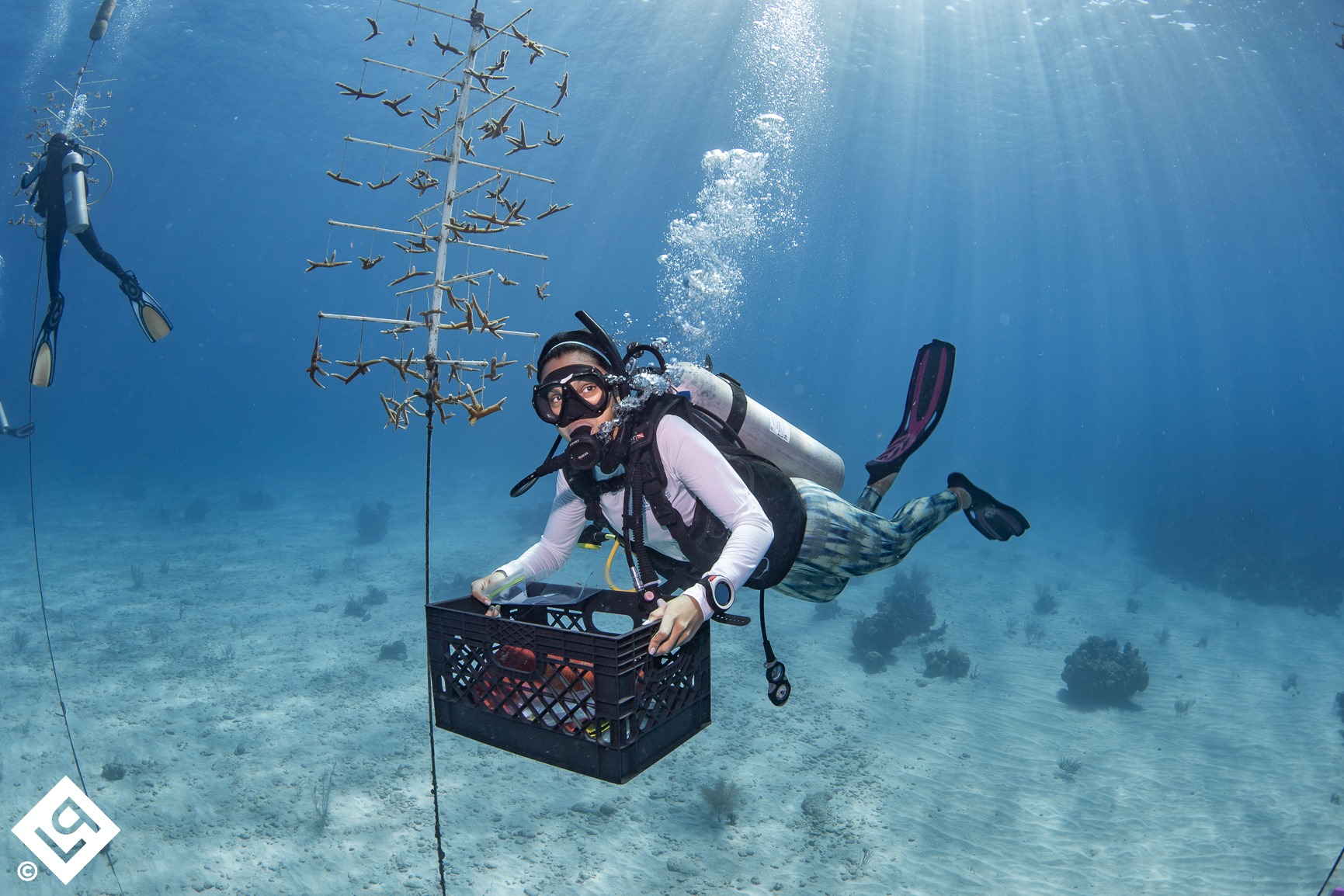 Roatan's Coral Restoration Program