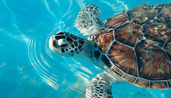 Isla-Mujeres-Tours-Snorkel-Beach-All-Inclusive-7