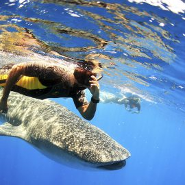 Isla-Mujeres-Cancun-Whale-Shark-Tours-Caribbean-Connection-35