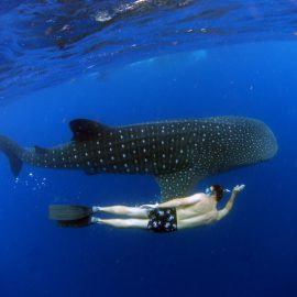 Isla-Mujeres-Cancun-Whale-Shark-Tours-Caribbean-Connection-36