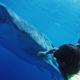 Isla-Mujeres-Cancun-Whale-Shark-Tours-Caribbean-Connection-37