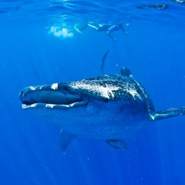 Isla-Mujeres-Cancun-Whale-Shark-Tours-Caribbean-Connection-49