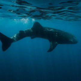Isla-Mujeres-Cancun-Whale-Shark-Tours-Caribbean-Connection-5