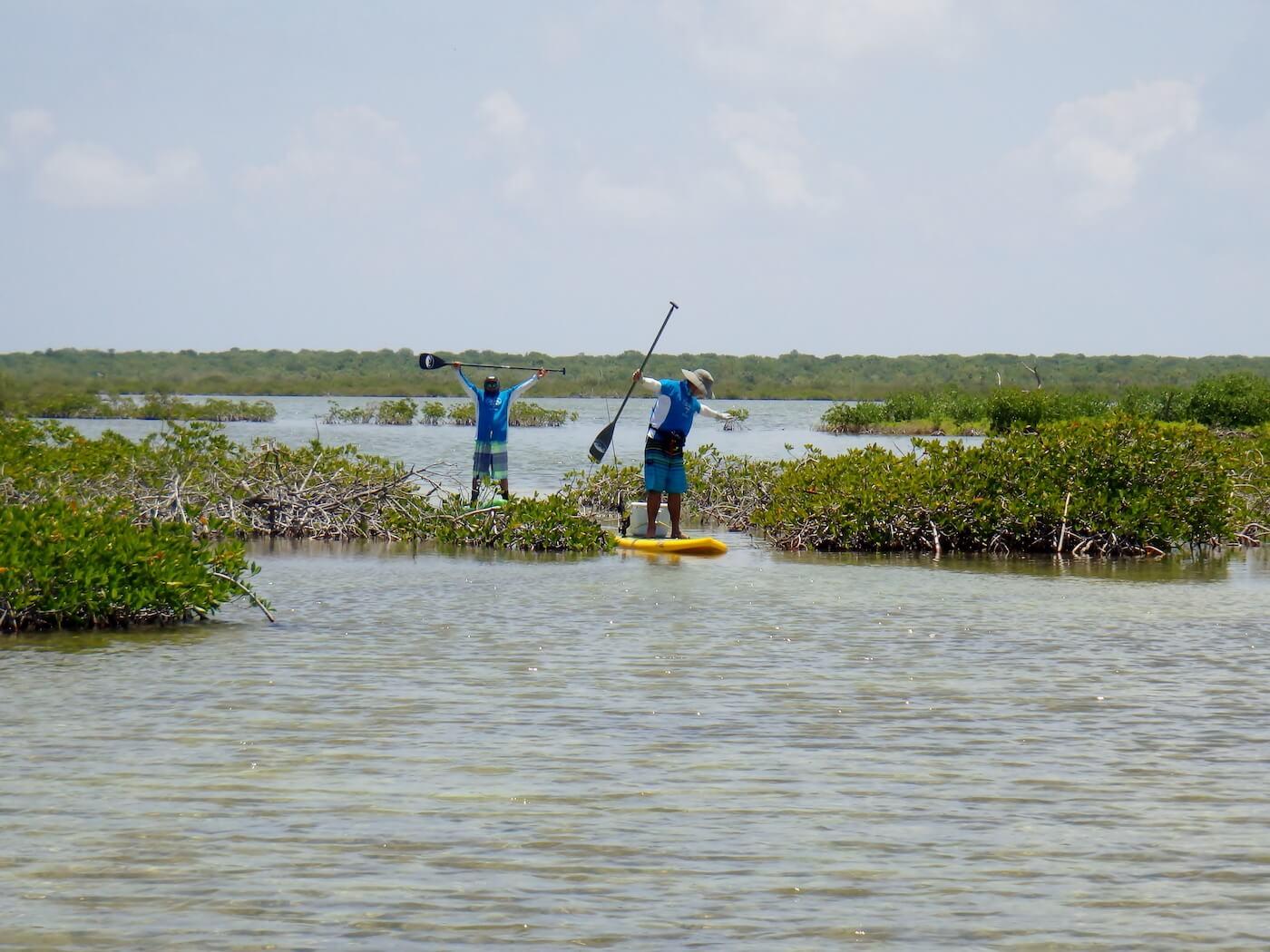 Cozumel SUP Mayan Mangrove Tour-2