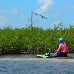 Mayan-Mangrove-SUP-Tour-12