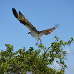Mayan-Mangrove-SUP-Tour-2