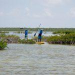Mayan-Mangrove-SUP-Tour-4