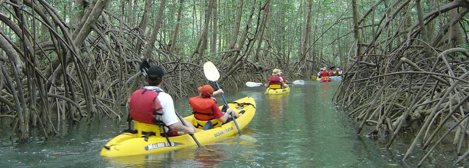 mangrove-kayaking-1