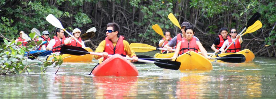 mangrove-kayaking-2