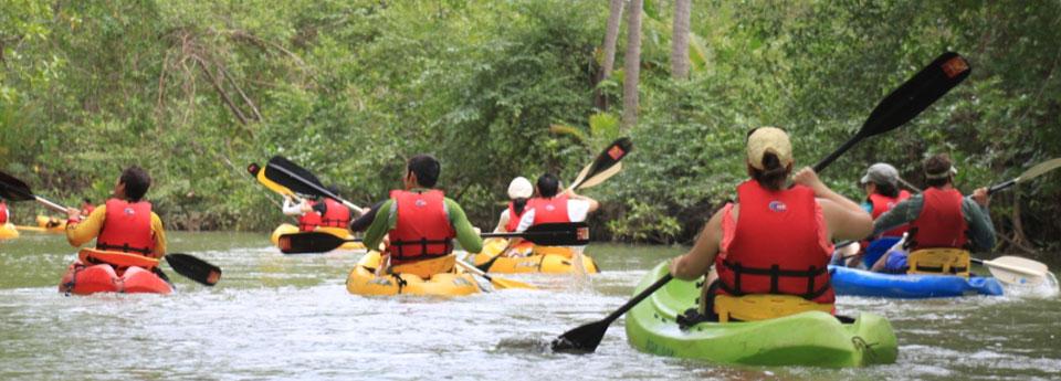 mangrove-kayaking-3