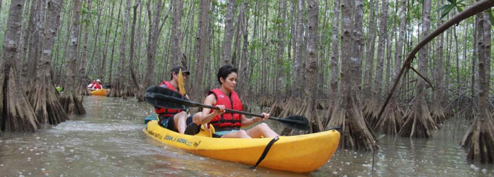 mangrove-kayaking-4