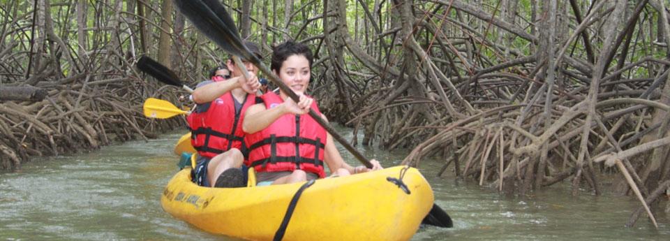 mangrove-kayaking-5