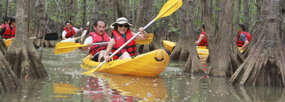 mangrove-kayaking