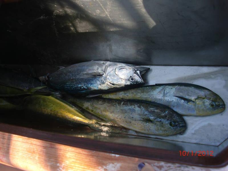 Fishing-Isla-Mujeres-7
