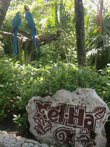 Isla-mujeres-trips-xel-ha-tulum-5