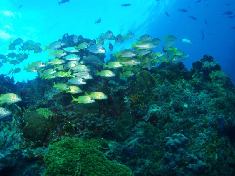 Scuba-Diving-7