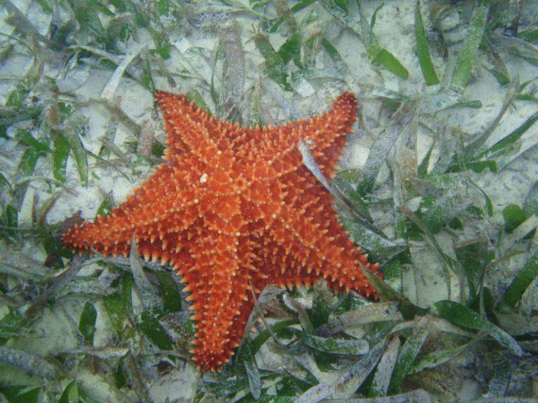 Starfish, snorkeling tour