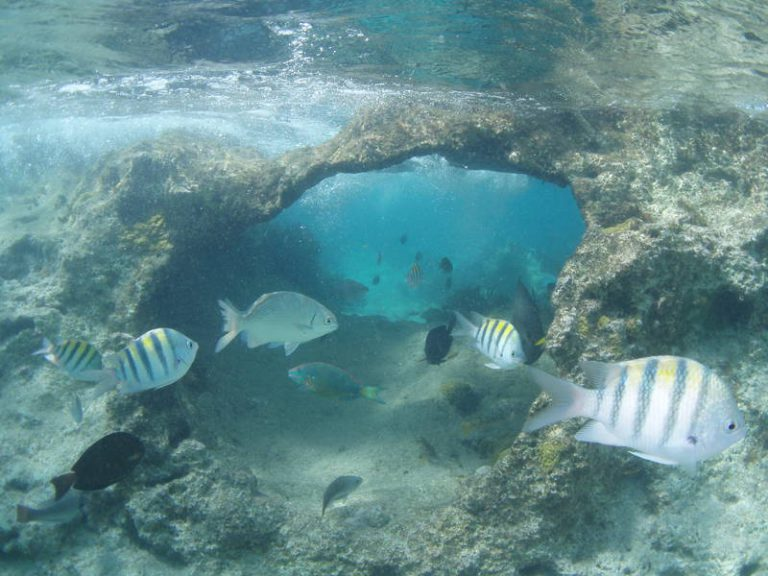 The Little Cave, at the Lighthouse reef.