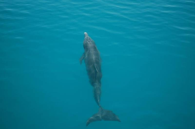 Dolphins swimming next to us, Sunset tour!