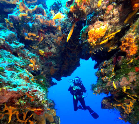 Cozumel Diving Trips