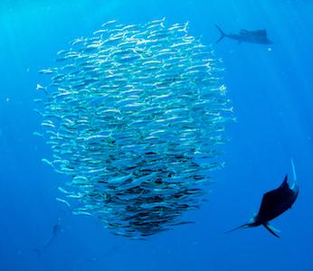 Sail Fish Snorkel Tour