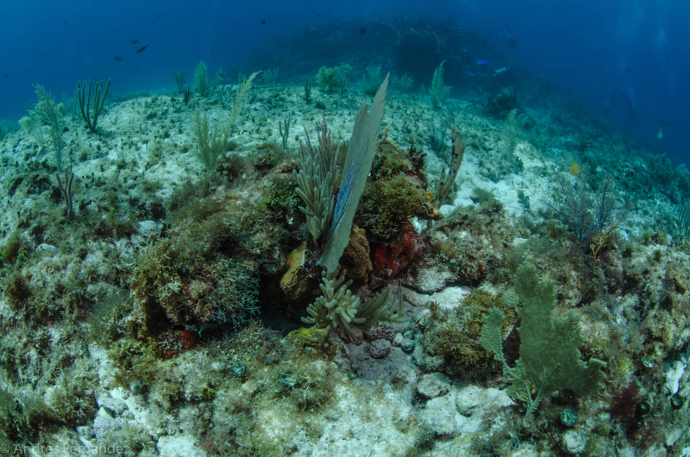 Isla Mujeres Coral Reefs Squalo Adventures Scuba Diving Snorkeling-12