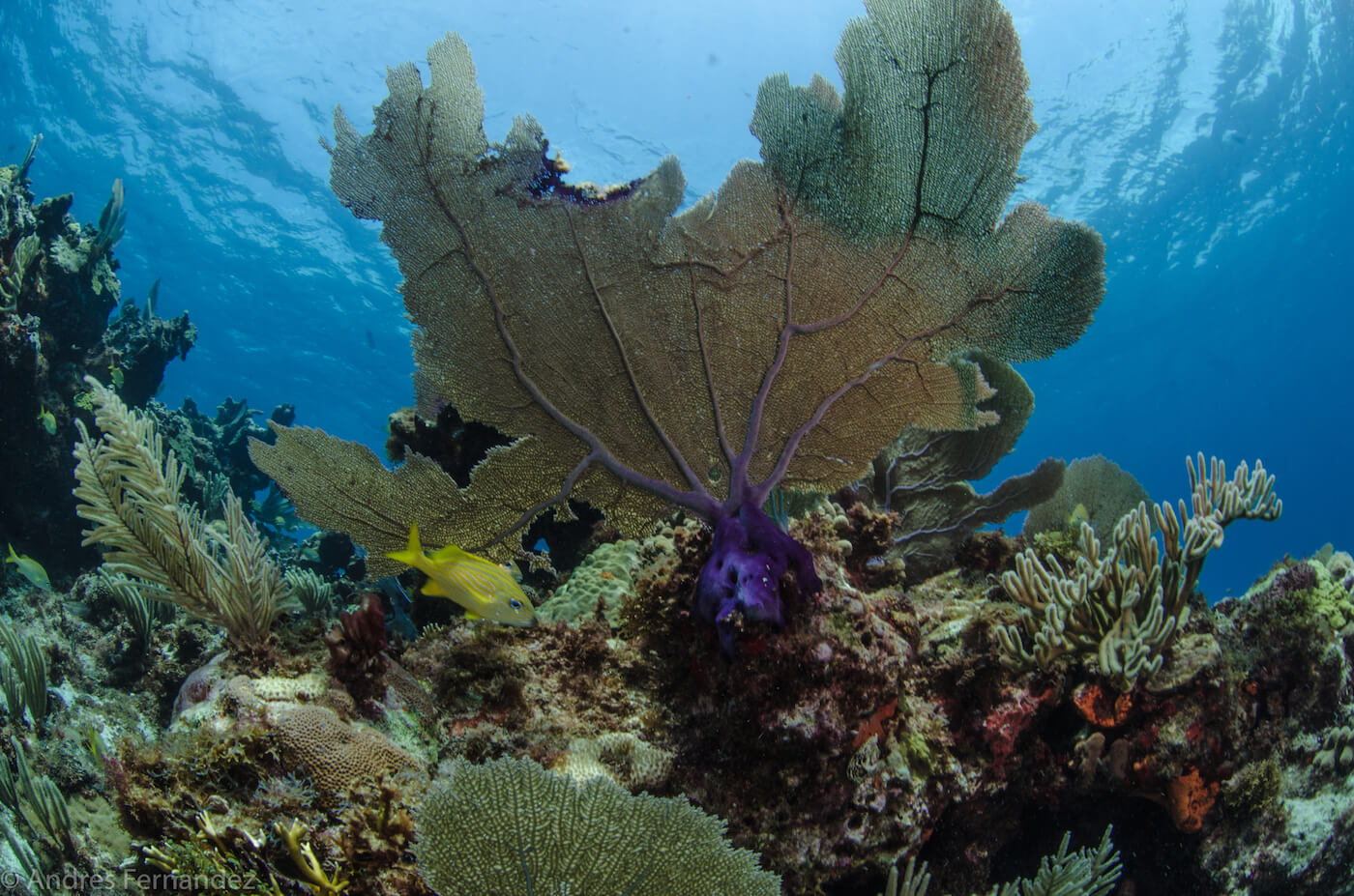 Isla Mujeres Coral Reefs Squalo Adventures Scuba Diving Snorkeling-15