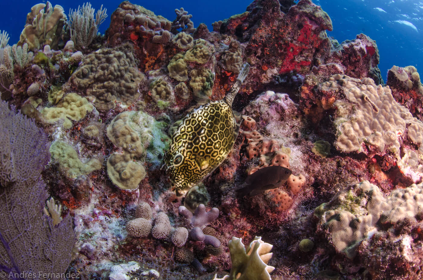 Isla Mujeres Coral Reefs Squalo Adventures Scuba Diving Snorkeling-19