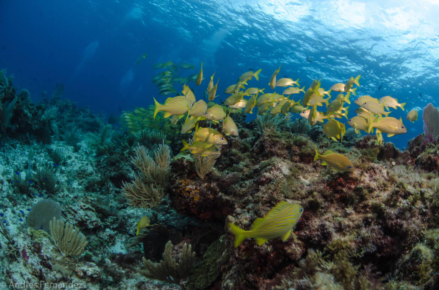 Isla Mujeres Coral Reefs Squalo Adventures Scuba Diving Snorkeling-23