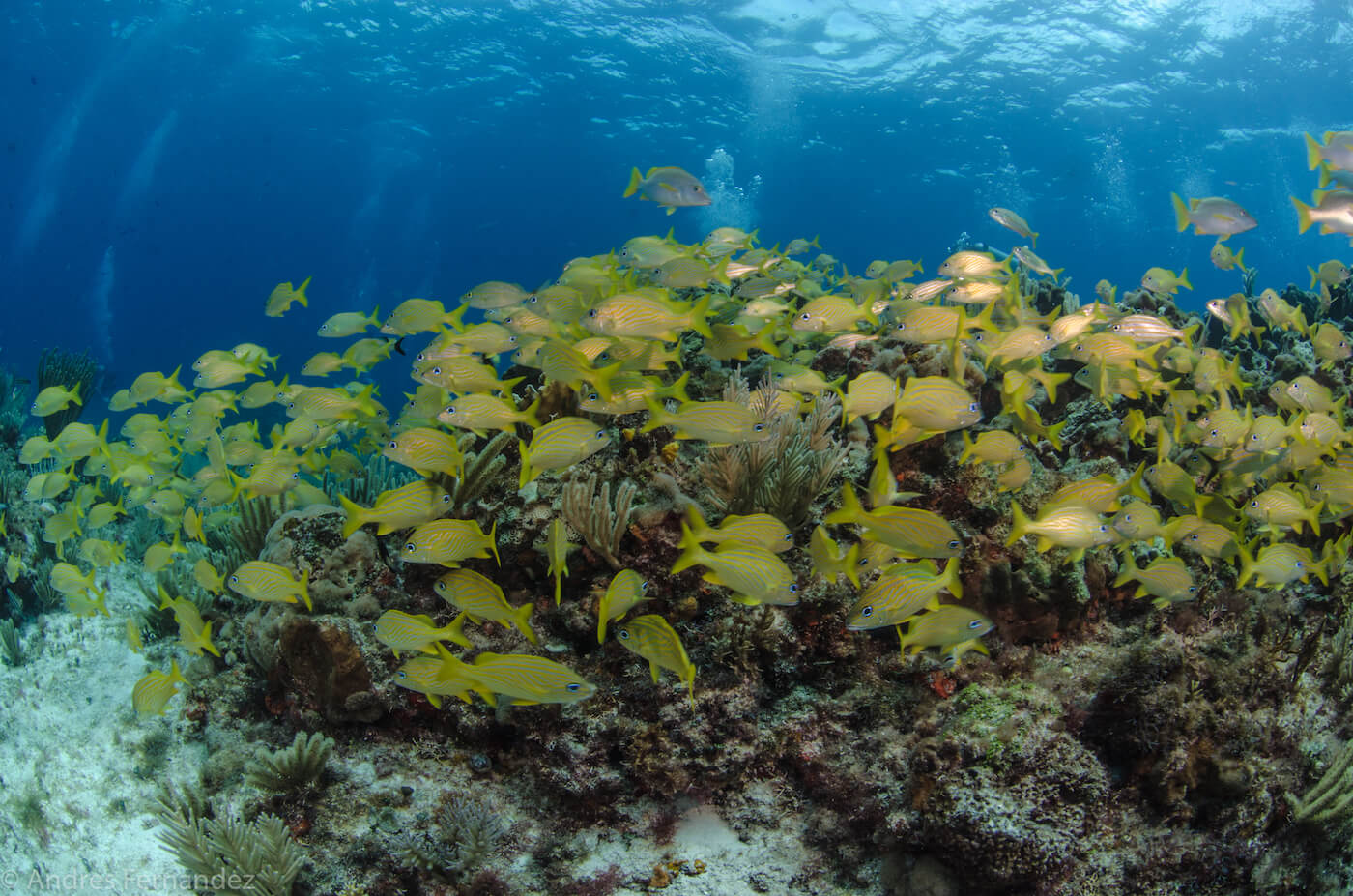 Isla Mujeres Coral Reefs Squalo Adventures Scuba Diving Snorkeling-24