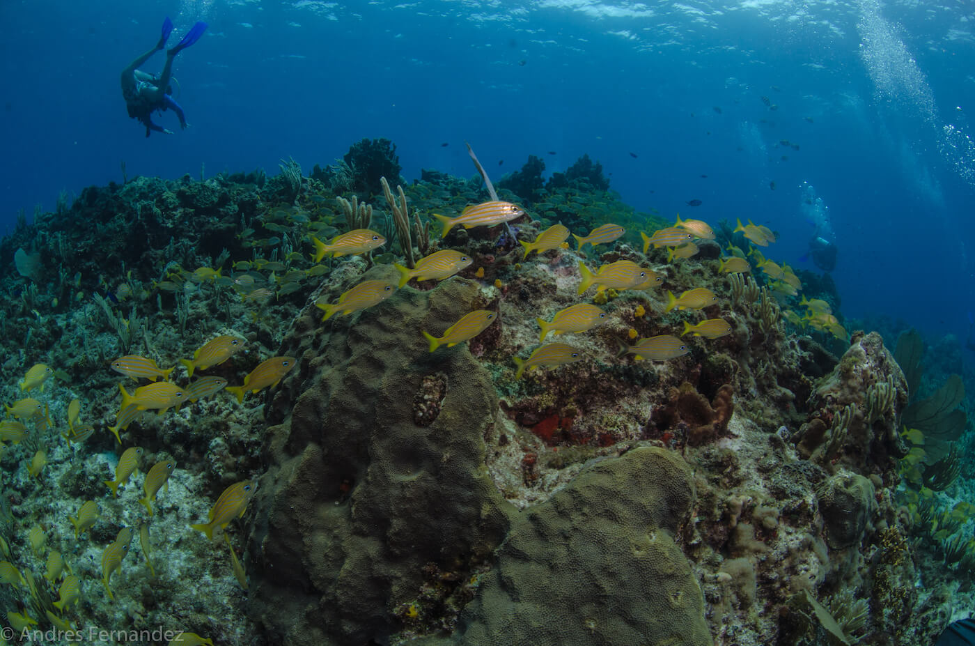 Isla Mujeres Coral Reefs Squalo Adventures Scuba Diving Snorkeling-26