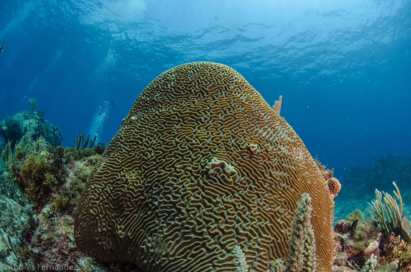 Isla Mujeres Coral Reefs Squalo Adventures Scuba Diving Snorkeling-35