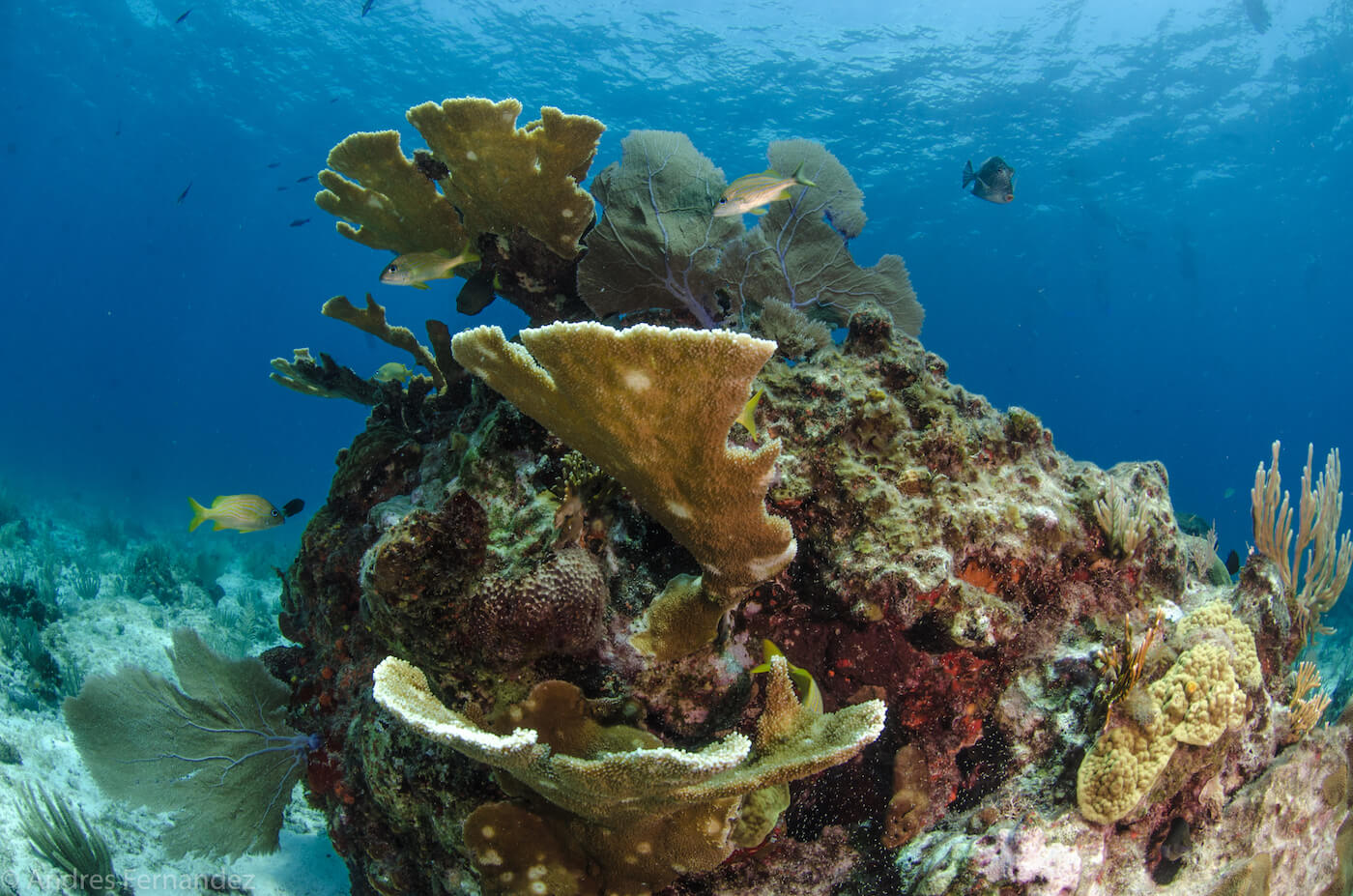Isla Mujeres Coral Reefs Squalo Adventures Scuba Diving Snorkeling-39