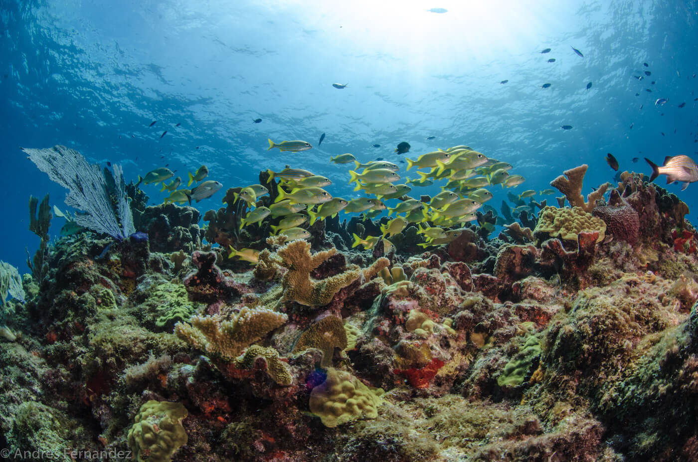 Isla Mujeres Coral Reefs Squalo Adventures Scuba Diving Snorkeling-5
