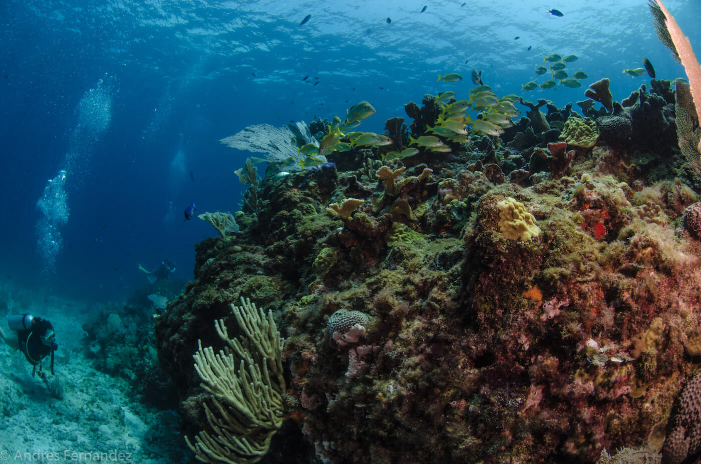 Isla Mujeres Coral Reefs Squalo Adventures Scuba Diving Snorkeling-7