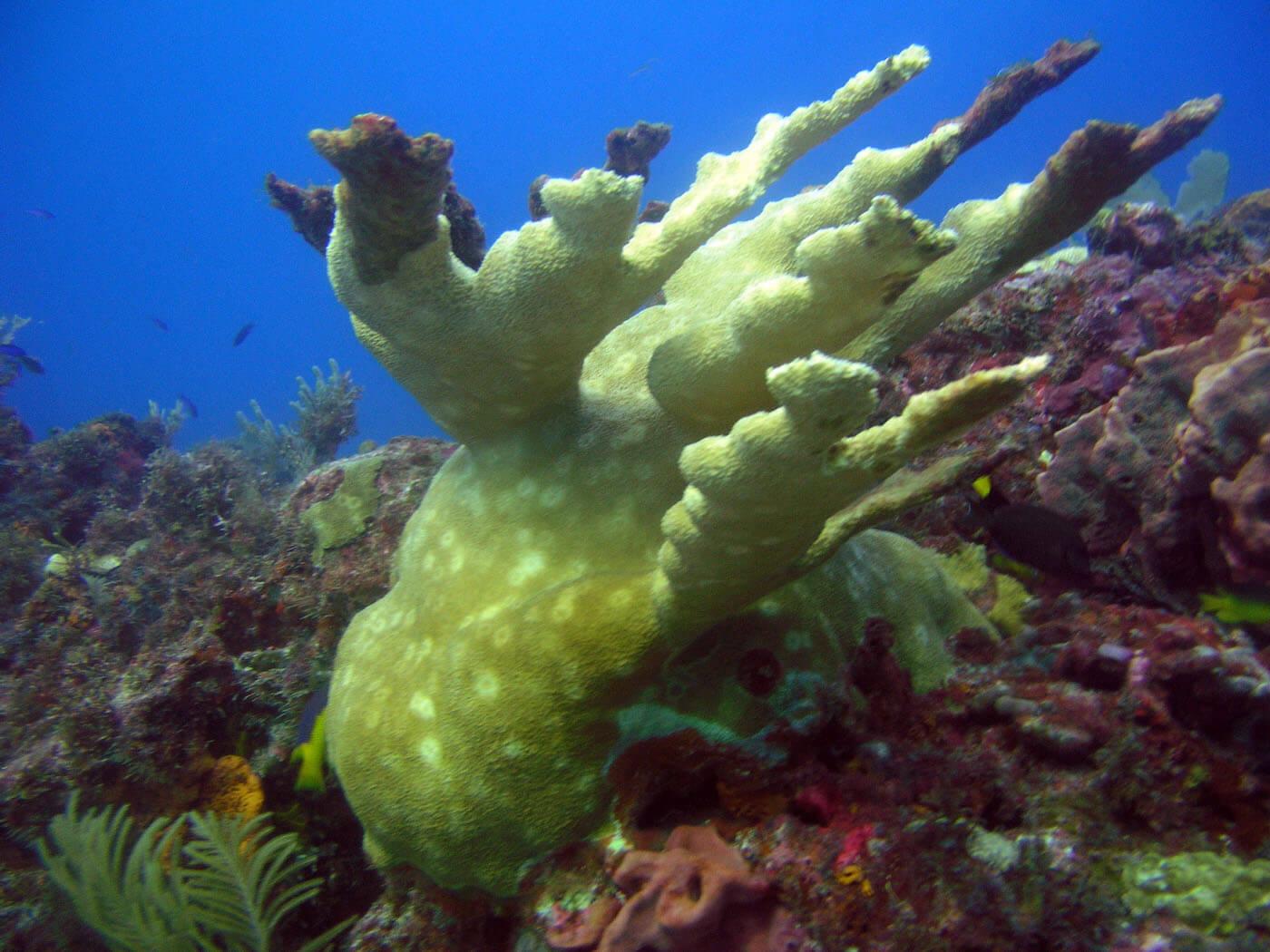 Isla Mujeres Manchones Reef Snorkel Scuba Diving Squalo Adventures-1