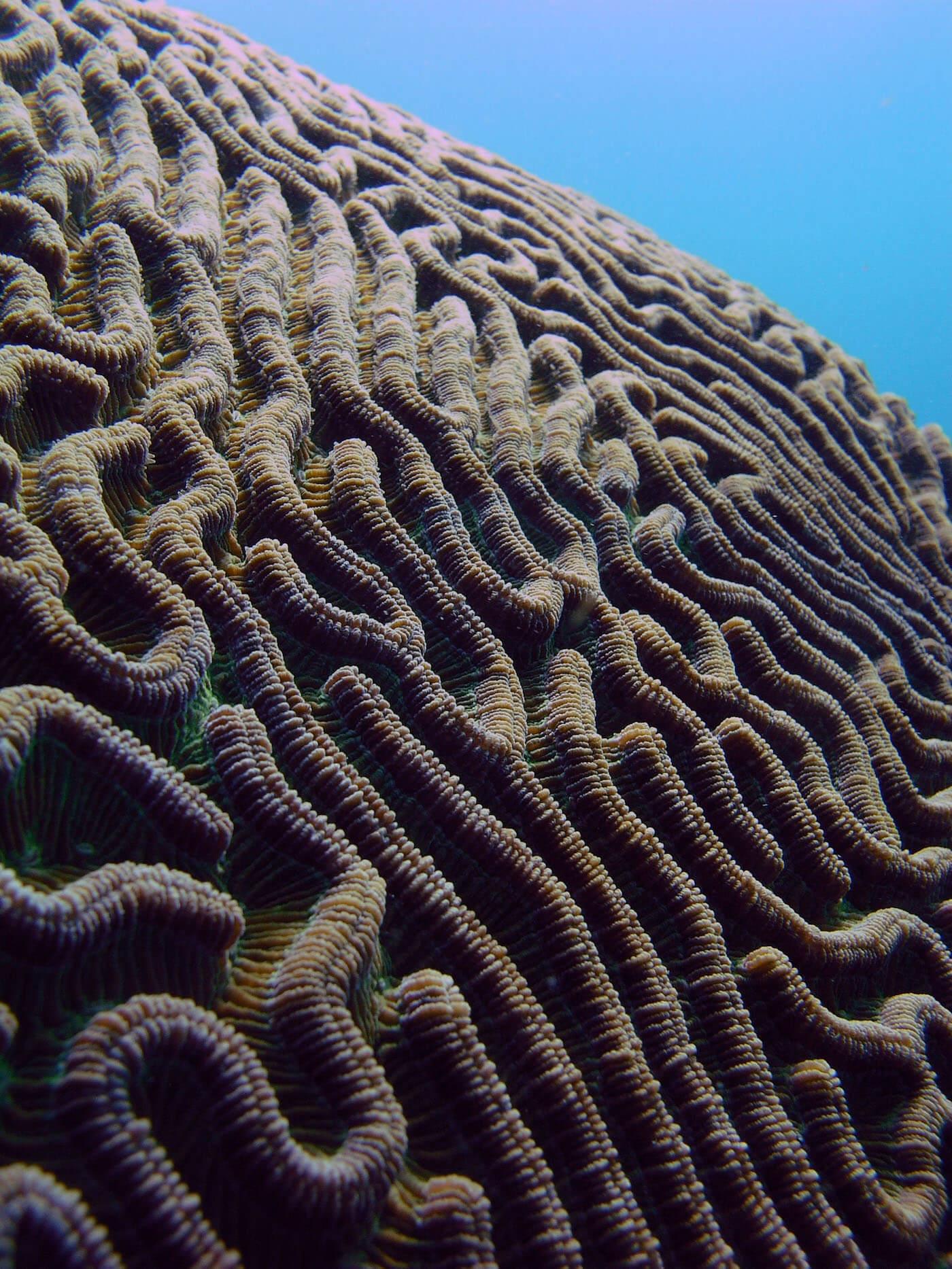 Isla Mujeres Manchones Reef Snorkel Scuba Diving Squalo Adventures-10