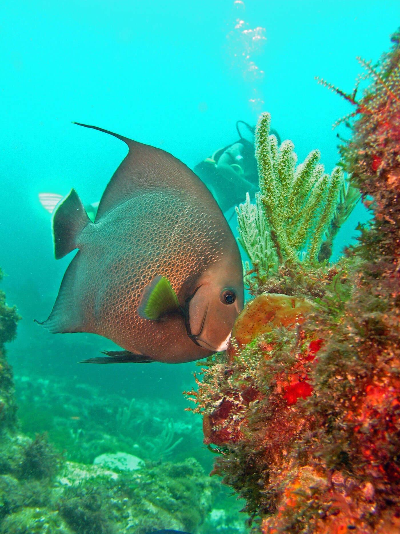 Isla Mujeres Manchones Reef Snorkel Scuba Diving Squalo Adventures-11